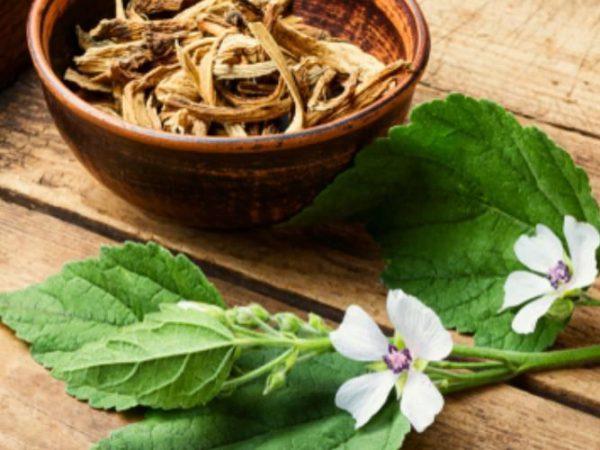 8 Manfaat Tanaman Marshmallow untuk Kesehatan